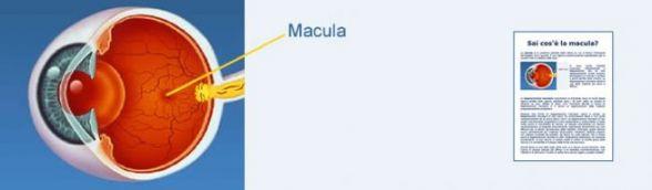 banner_macula1